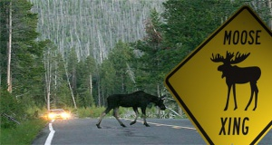 MOOSE-CROSSING